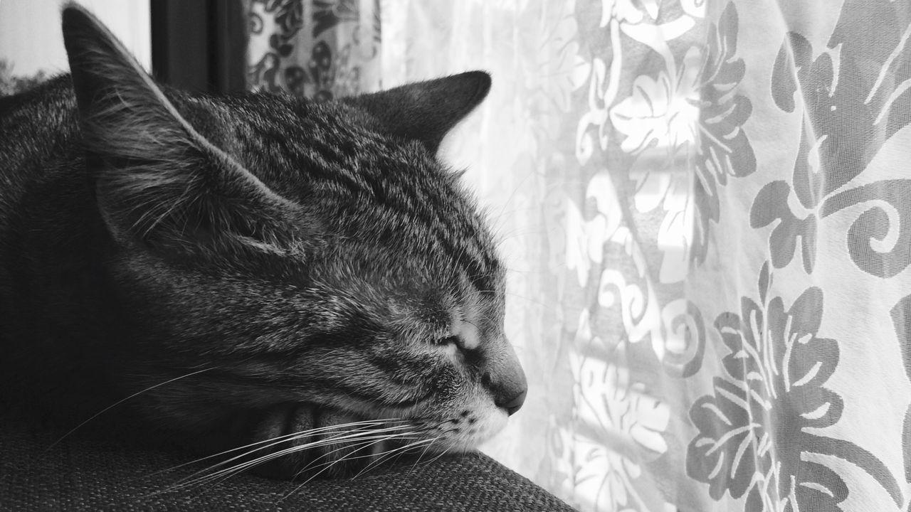 Close-Up Of Cute Cat Sleeping On Sofa