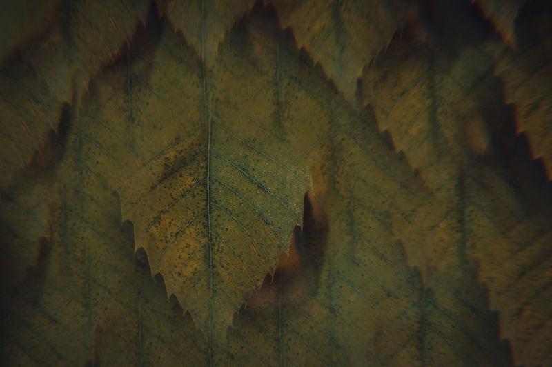Full frame shot of autumn leaves on wall
