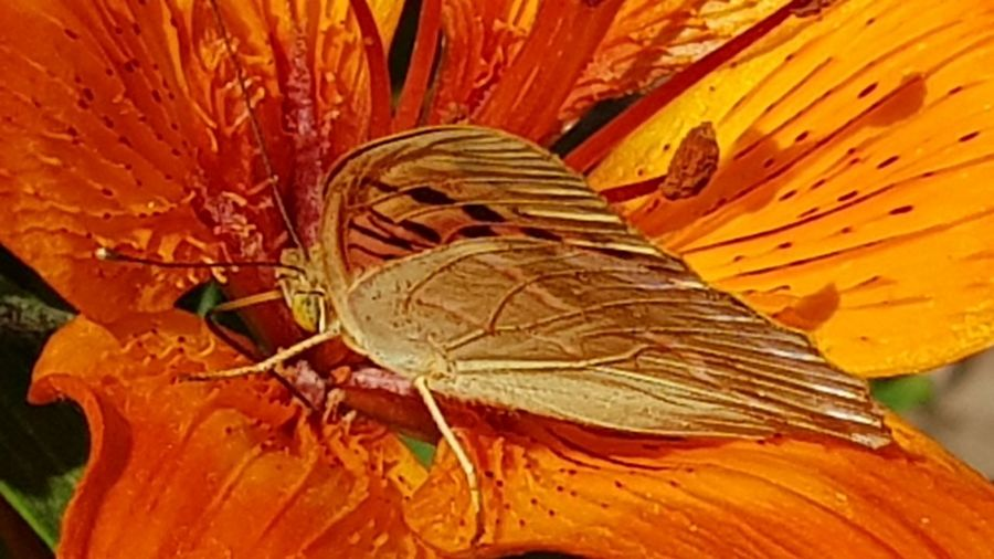Insecttheme