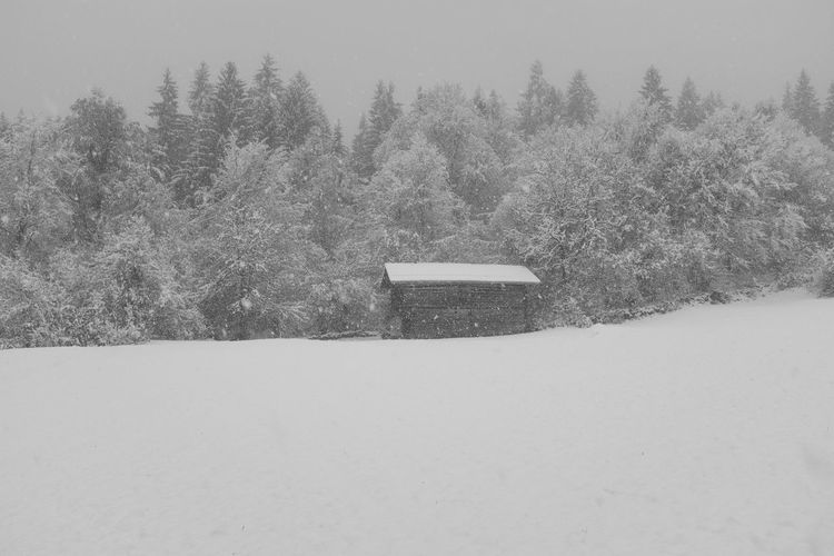 Snow covered field by trees