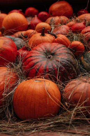 Orange pumpkins lying in the hay. autumn decoration. october and november. the time of harvest.