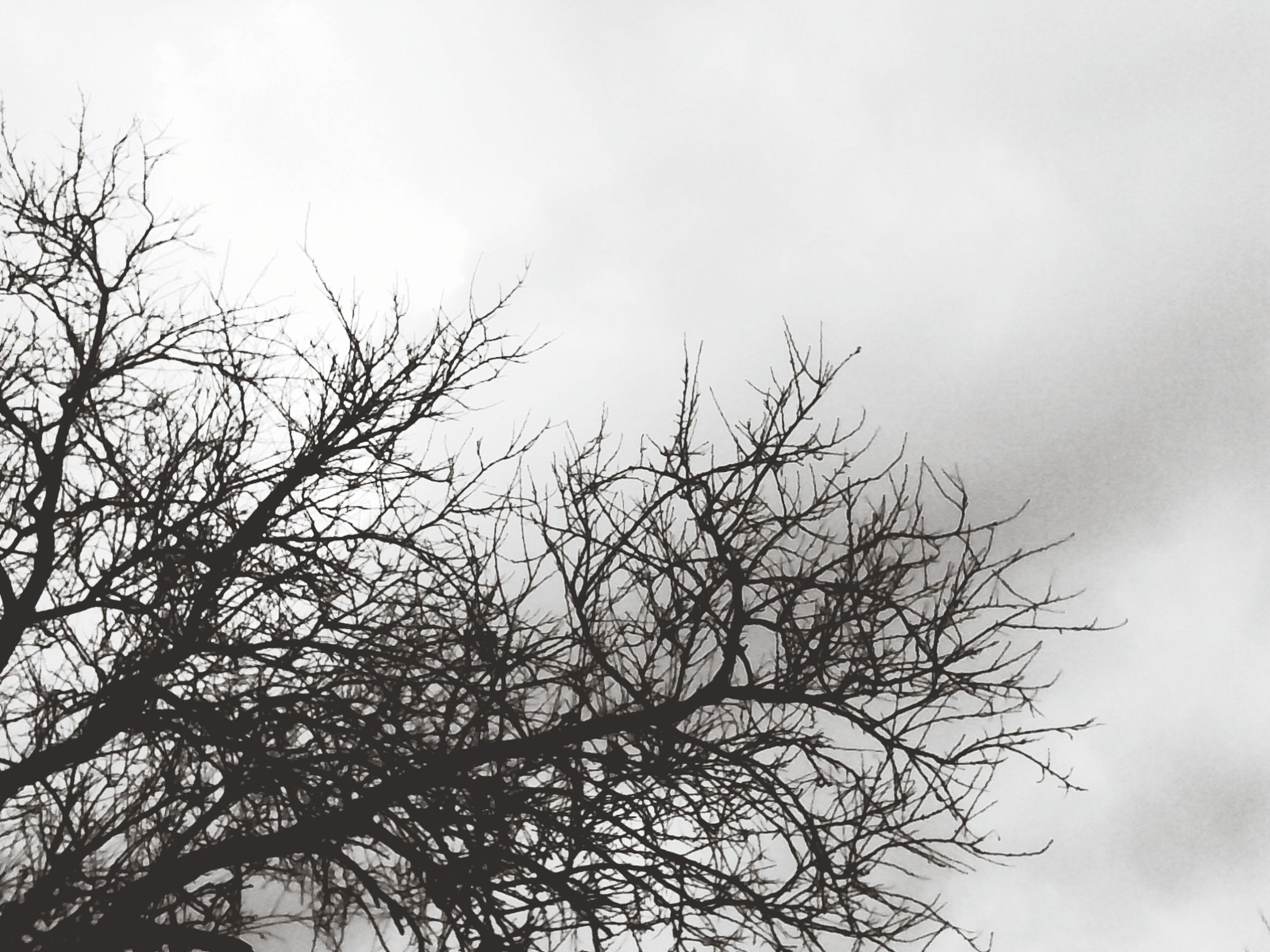 bare tree, branch, low angle view, tree, sky, nature, tranquility, beauty in nature, clear sky, growth, scenics, outdoors, tranquil scene, no people, silhouette, day, dead plant, high section, cloud - sky, copy space