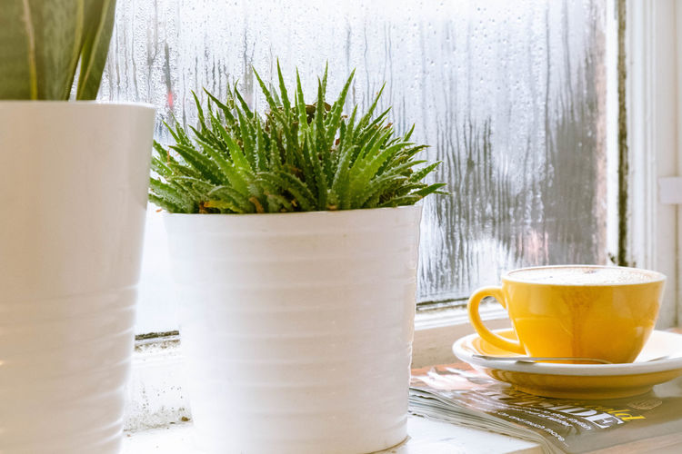Drink Food And Drink Refreshment Cup Drinking Glass Table Mug Glass Plant Close-up Nature Tea - Hot Drink Tea Crockery Freshness Day No People Hot Drink Tea Cup Breakfast Still Life Still Life Photography EyeEm Stilllife
