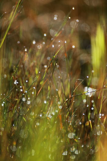 Artful Blured Lights Close Up Grass Close Up Nature Colorful Green Color Magical Close U Morning Dew Morning Light