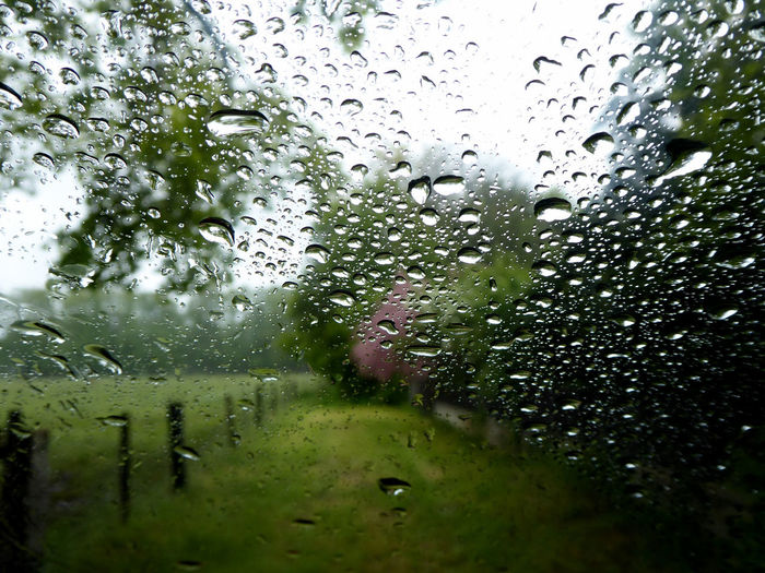 rainy day😍 Beauty In Nature Beauty In The Rain😍 Lucky Me🦄 For My Friends 😍😘🎁 Exceptional Photographs Nature Is My Sanctuary 🌳💚 Nature Is My Religion I Love Raindrops On The Window Water Tree RainDrop Window Wet Drop Backgrounds Glass - Material Close-up Sky