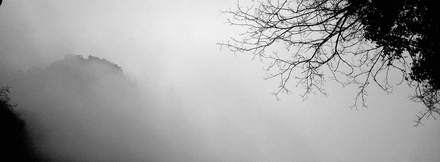 Low angle view of tree in foggy weather