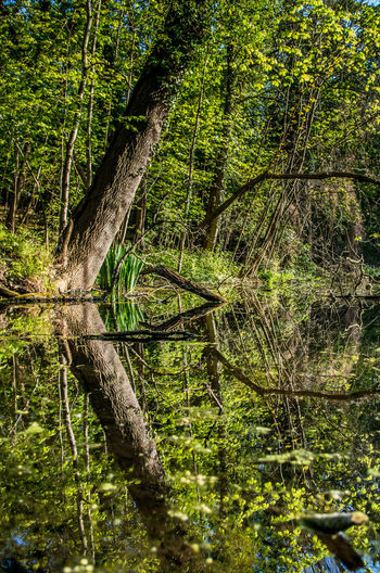 Day Forest Lake Nature No People Outdoors Reflection Scenics Tranquil Scene Tranquility Tree Tree Area Tree Trunk Water WoodLand EyeEmNewHere
