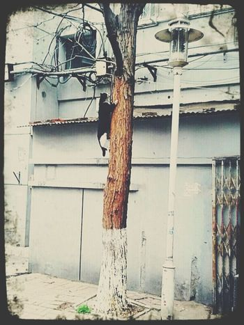Street Photography Streetphotography Cat Walk This Way Animals Climbing Tree Climbing Trees China Playing