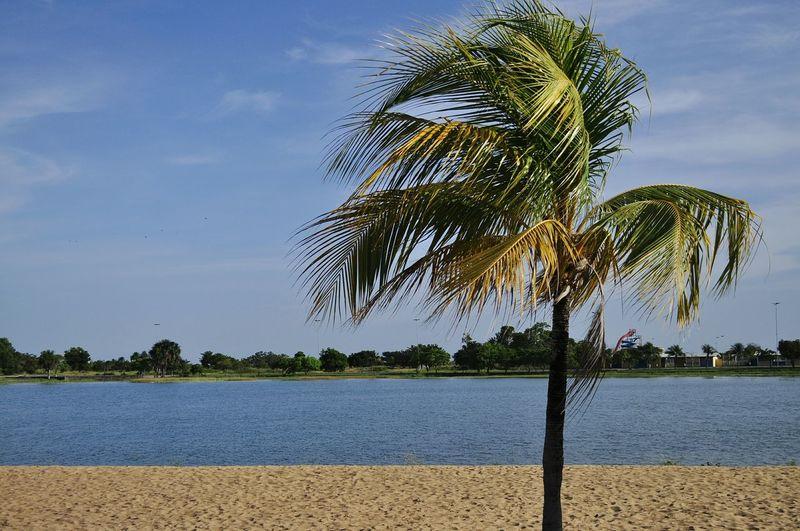 Paisagem magnífica do nosso parque Anauá Coqueiro Lago Lake Praia Beach Boa Vista-RR
