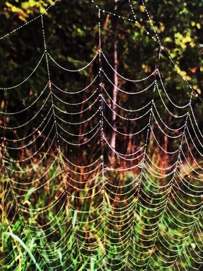 Spider Web Spider Rain Rainy Days Raindrops Drop Nature Close-up Beauty In Nature IPhone Autumn