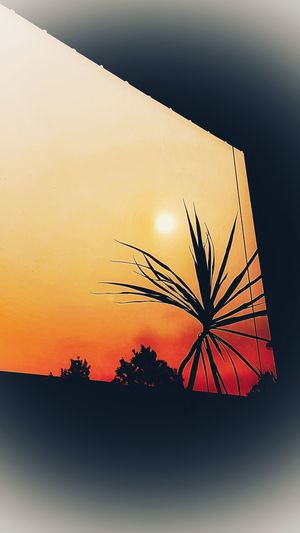 View out of the window 😏 https://youtu.be/J4LHbt0bgWQ Sunset Silhouette No People Nature Close-up Sunset_collection View Out Of The Window Window From My Point Of View Orange Color Perspectives On Nature