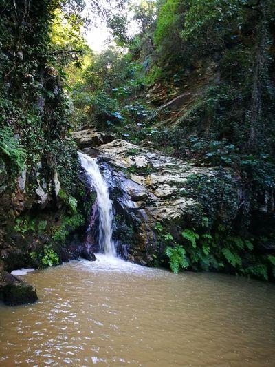Eyeemtunisia Eyeemtunisiacommunity Eyeemtunisie Bnimtir Tunisia Tree Water Waterfall Motion Forest Sky