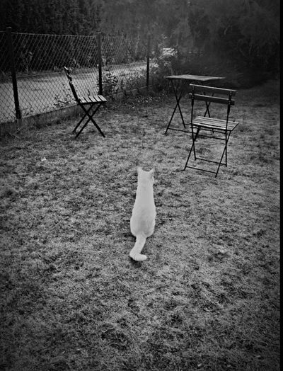 Black And White Streetphotography Beautiful Biutiful Cat F4F -caramel-