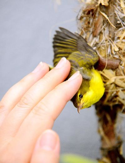 Check This Out Sunbird my house Loving Kindness my garden tender love My Humble Photo Beautiful Nest Building