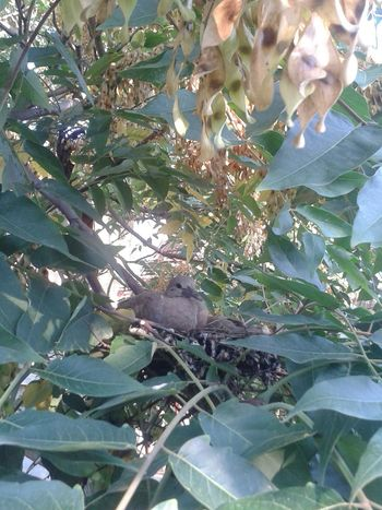Our little friends. There are actually two of them but I guess the other one is a little bit shy. Pigeons Babypigeon Hi!