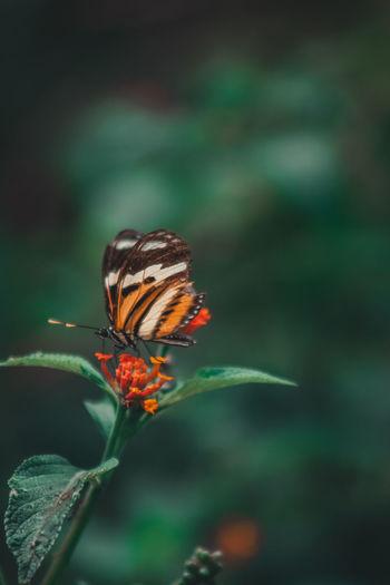 Fly Perching