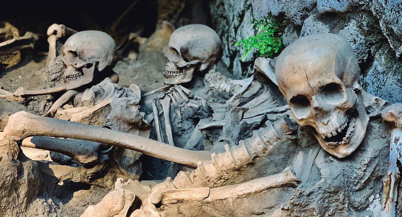 bone, human skull, human skeleton, history, the past, day, skeleton, architecture, human representation, cemetery, skull, old, nature, grave, outdoors, representation