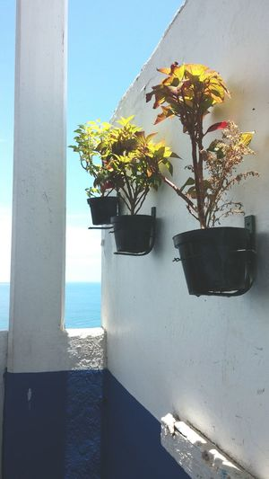 Plants Stepbystep Hanging Plants Mexico