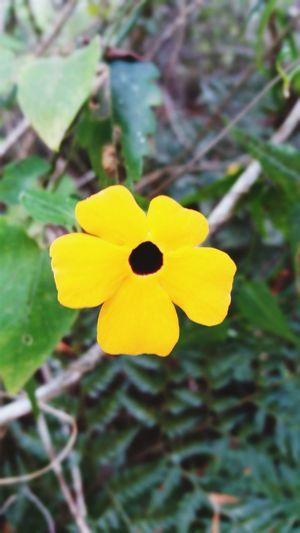 Flower 🌺Flower