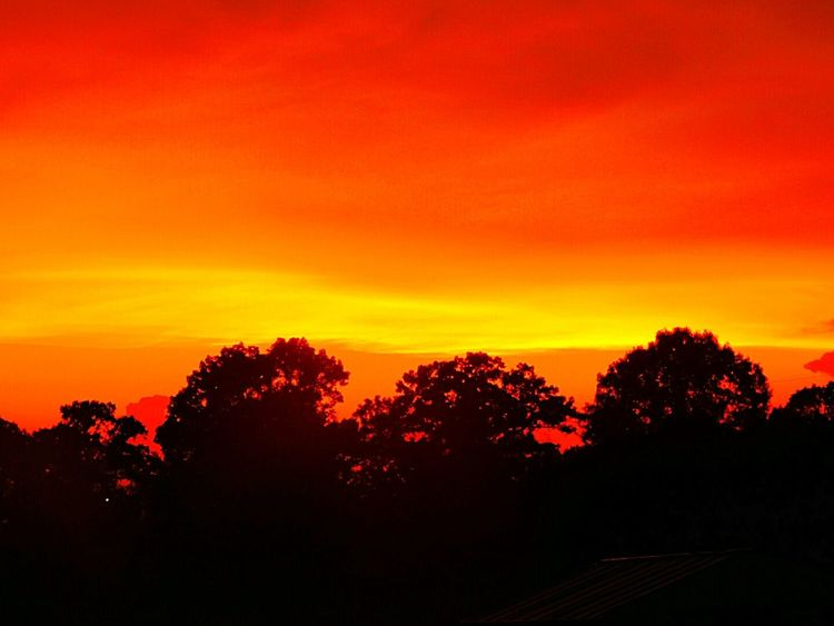 Greenbrier, Arkansas Sunset Silhouettes Vibrant Colors Beautiful Sky Sky Colors Skycollection Skylovers Sky And Trees Tree Silhouette