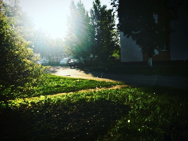Tree Sunlight Shadow Grass Sky