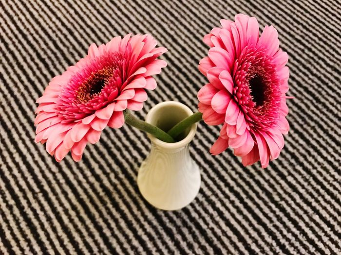 High Angle View Of Pink Gerbera Daisies In Vase On Table