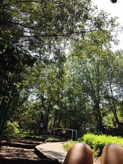 green 🌳 Summer15 Chipinque Monterrey Trees