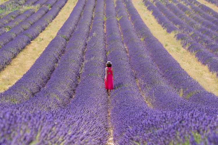 Keep walking. The Great Outdoors - 2017 EyeEm Awards The Essence Of Summer Between The Rows Electric Pink Fashion Footpath Idilic Scene Keep Walking Landscape Lavender Lavender Field Lifestyles Look Forward Purple Right In The Middle Rows Of Lavender Rural Landscape Simmetry The Way Forward Tranquility Walk Forward Woman In Pink Dress Live For The Story Showcase July Beautifully Organized Sommergefühle Breathing Space Lost In The Landscape An Eye For Travel Summer Road Tripping