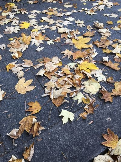 Gelbe Ahornblätter im Herbst auf dem Gehweg in München Leaf Plant Part Autumn Change Leaves Dry Falling High Angle View No People Nature Maple Leaf Road Outdoors Natural Condition City