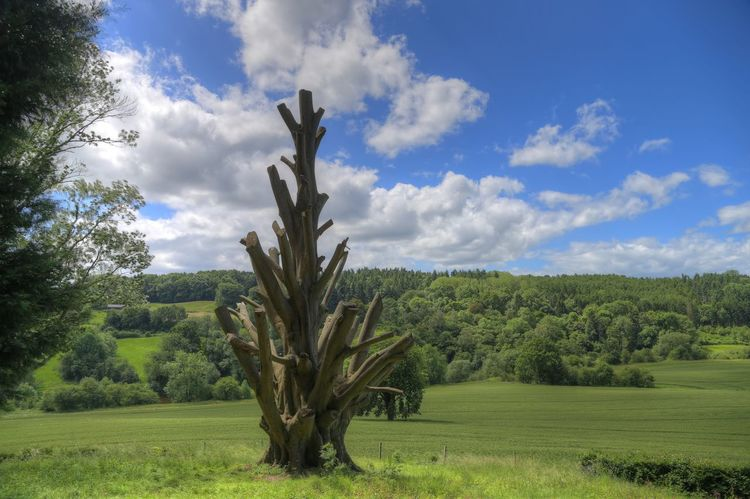 Arley Arboretum Worcestershire Uk Beauty In Nature Branch Cloud - Sky Day England Field Grass Green Color Growth Landscape Nature No People Outdoors Scenics Sky Tranquil Scene Tranquility Tree Tree Trunk