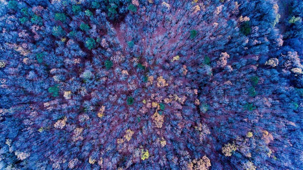 Perspectives On Nature Autumn Forest Halloween Mood Colors Dji Phantom 4 Nature Beauty In Nature Czech Republic Fromwhereidrone