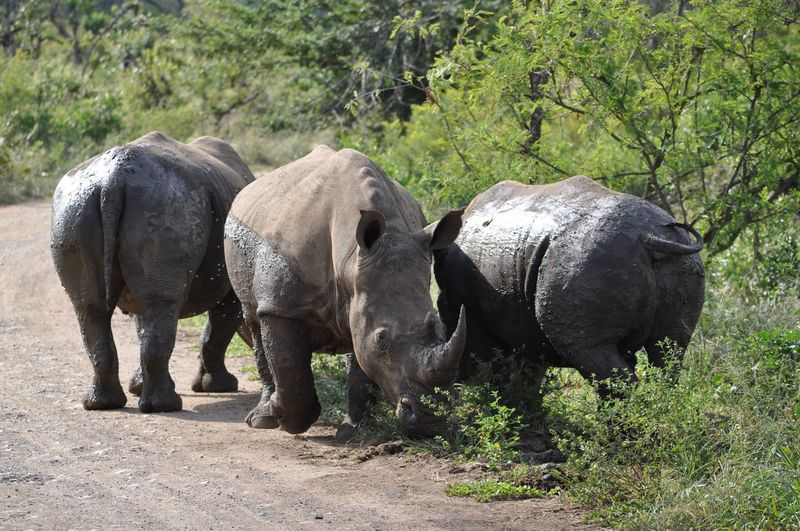 Three animals in south africa