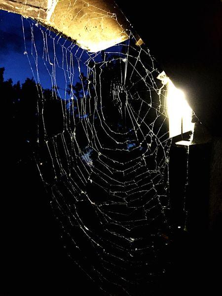 Night Spiderweb Spooky