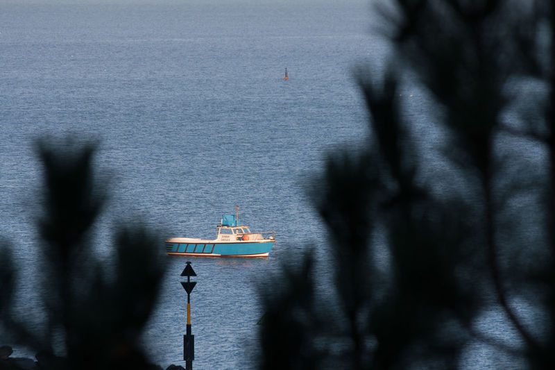 Fishing boat through the trees. Beach Boat Fishing Fishing Boat New Quay Sea Sea And Sky West Wales