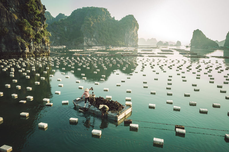Oyster farming on the sea Water Day Sea Lifestyles Waterfront On The Sea Oyster  Halong Bay Vietnam Harvest Limestone Islands