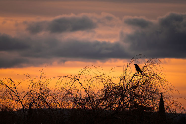 Silhouette bare trees on field against sky during sunset