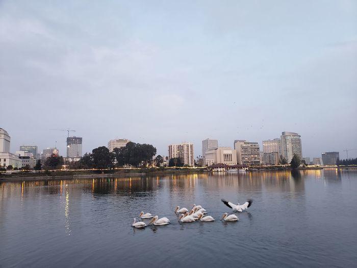 View of birds in lake against buildings