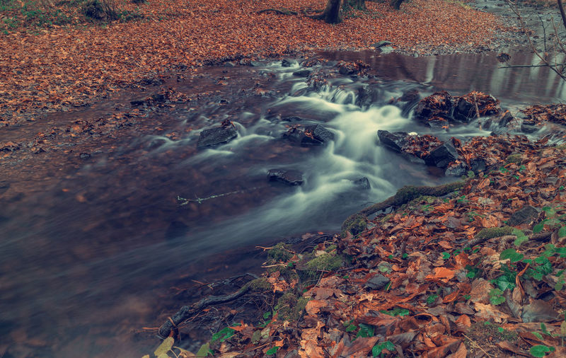 River in the forest in autumn. Art Beauty In Nature Backgrounds Water Land Nature Motion Rock No People Long Exposure Day Solid Plant Part Autumn Rock - Object Blurred Motion Forest High Angle View Tree Outdoors Scenics - Nature Stream - Flowing Water Flowing Flowing Water