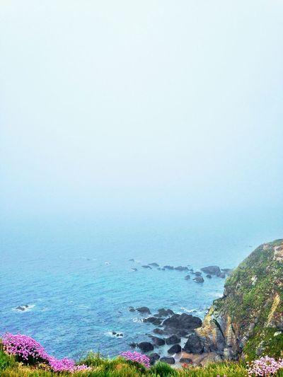 Beach Cliffs Ocean Fog Flowers Devon United Kingdom