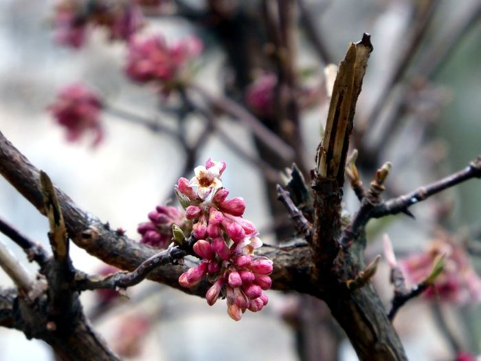from vienna with ❤ New Life Begins Love Springtime My Favorite Season For My Friends😚 Still Cold Outside 😤 Signs Everywhere🌱 Spring Is Near🤗 Flower Head Tree Flower Branch Springtime Pink Color Blossom Close-up Sky