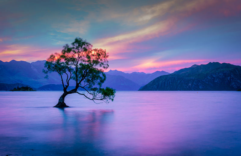 Tree in lake against sky during sunset