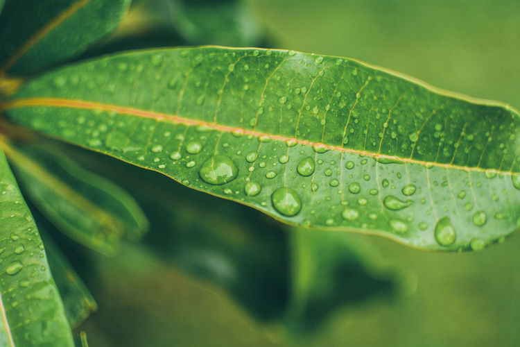 rain Leaf Plant Part Water Green Color Drop Wet Close-up Nature Growth No People Plant Day Leaf Vein Beauty In Nature Focus On Foreground Freshness Outdoors Selective Focus Rain Purity Leaves Dew RainDrop Rainy Season Blade Of Grass