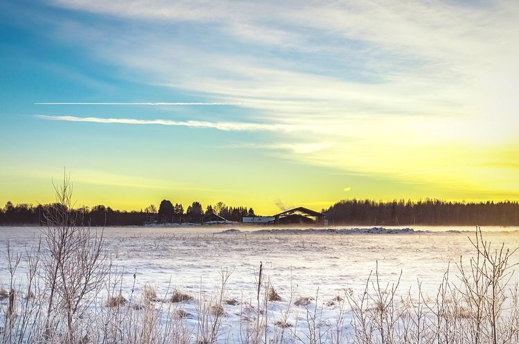 A farm falls silent in winter. Farmland Farm Buildings Snow Snowy Field Sunset Trees And Sky Trees Background Forest Background Snowfall Winter Baltic Baltic Countries Landscape Countryside Country Life Rural Rural Scene White Snowing Sunlight Clouds Dusk Evening Light Yellow Sky Yellow Sunset
