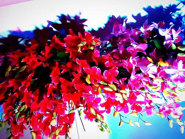 Flowers Small Flowers Red Flowers Purple Flowers Wedding Flowers Wedding Decor Colorful Shadows