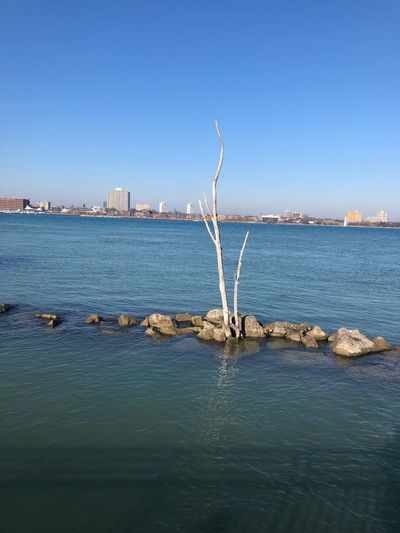 Tree Water Sky Tranquility Clear Sky Copy Space Day Tranquil Scene No People Waterfront Blue Scenics - Nature
