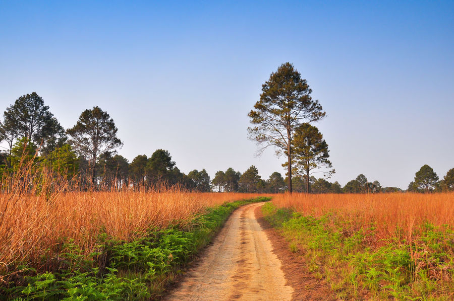 Agriculture Beauty In Nature Cereal Plant Clear Sky Crop  Day Field Grass Growth Landscape Nature No People Outdoors Plant Rural Scene Scenics Single Lane Road Sky Sunset The Way Forward Tranquil Scene Tranquility Tree