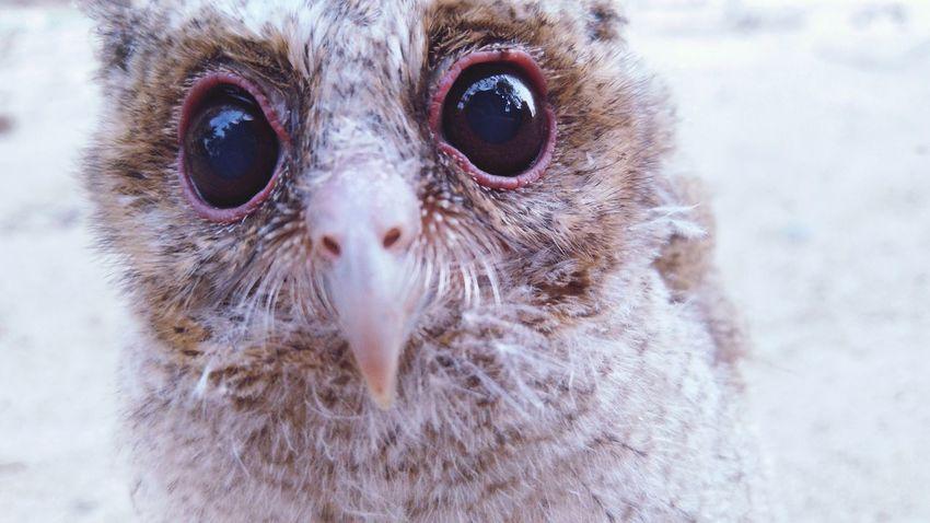 EyeEm Selects Bird Eyeball Portrait Bird Of Prey UnderSea Owl Looking At Camera Eye Animal Eye Close-up