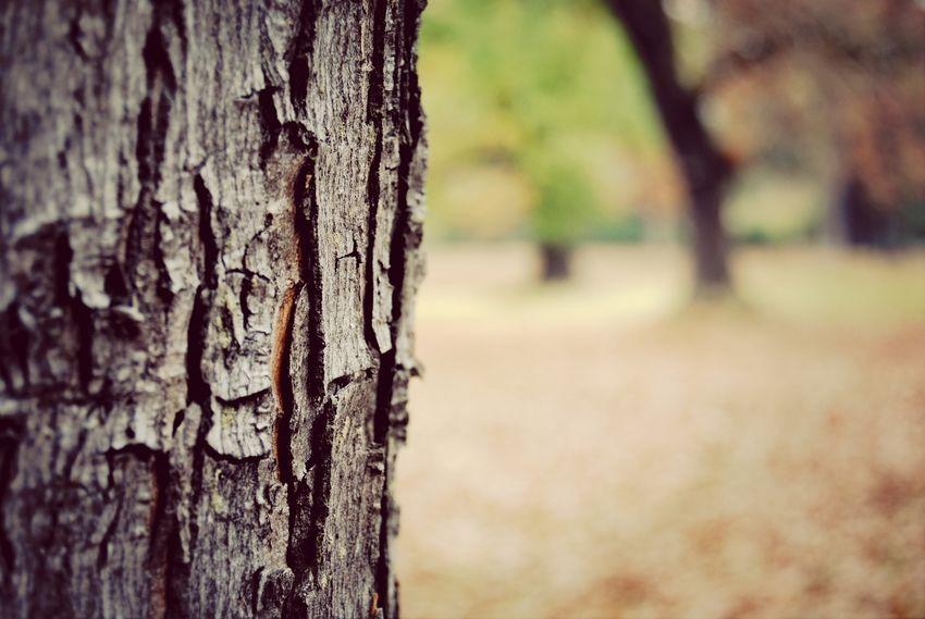 Taking Photos EyeEm Best Shots EyeEm Nature Lover Near And Far