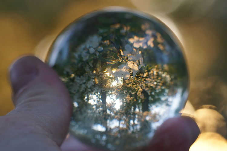 Close-up of hand holding crystal ball against plants