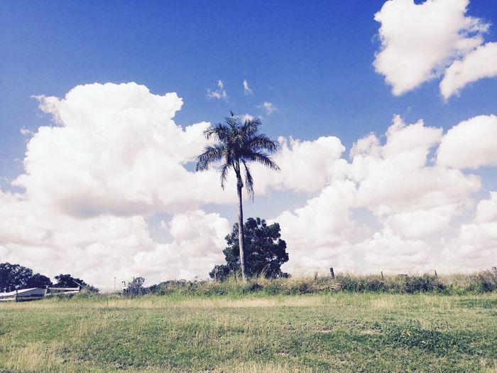 Roadtrip Palm Trees